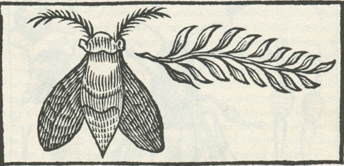 Borel Illustration