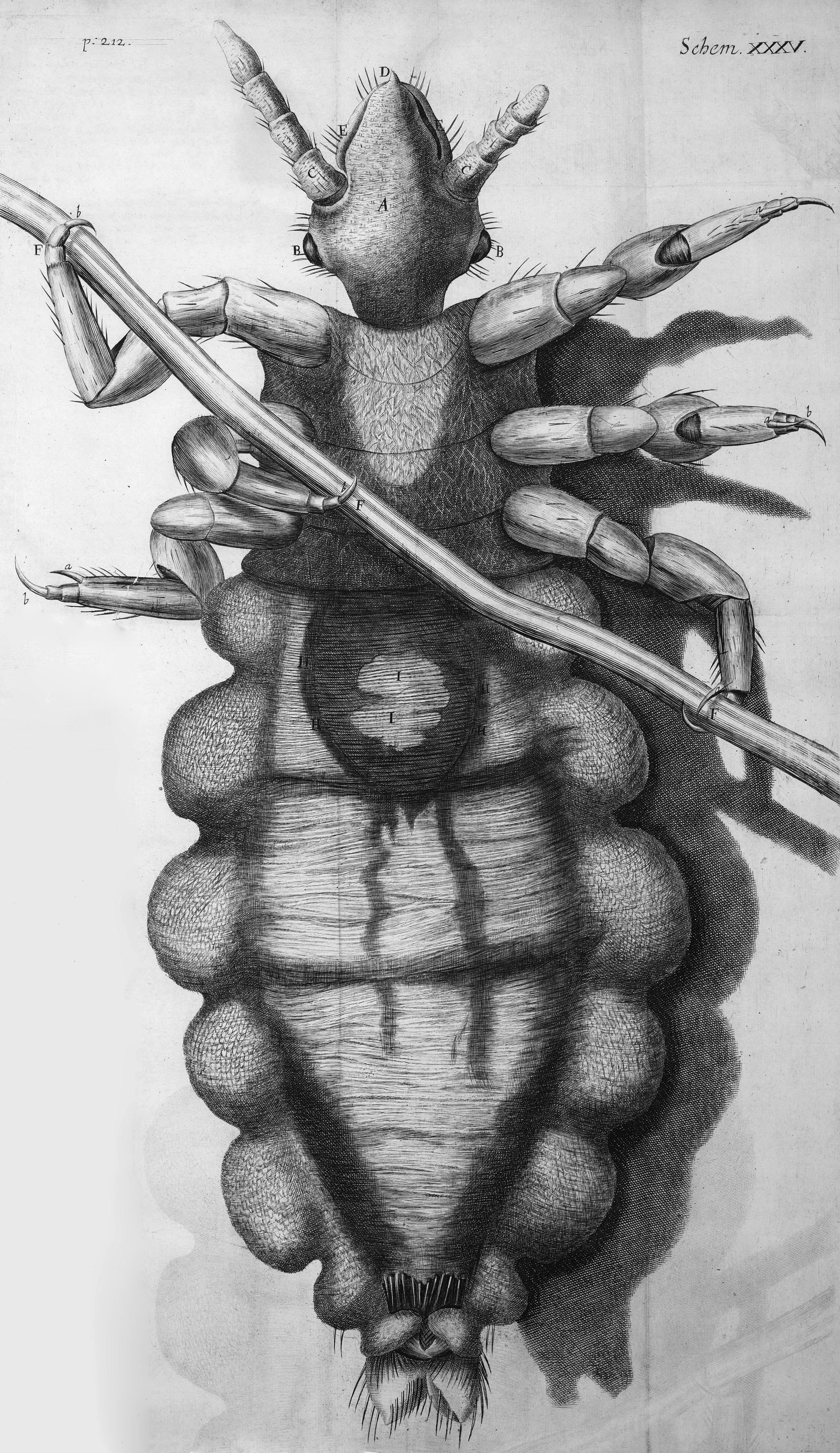 Making The Indiscernible Visible Robert Hooke S