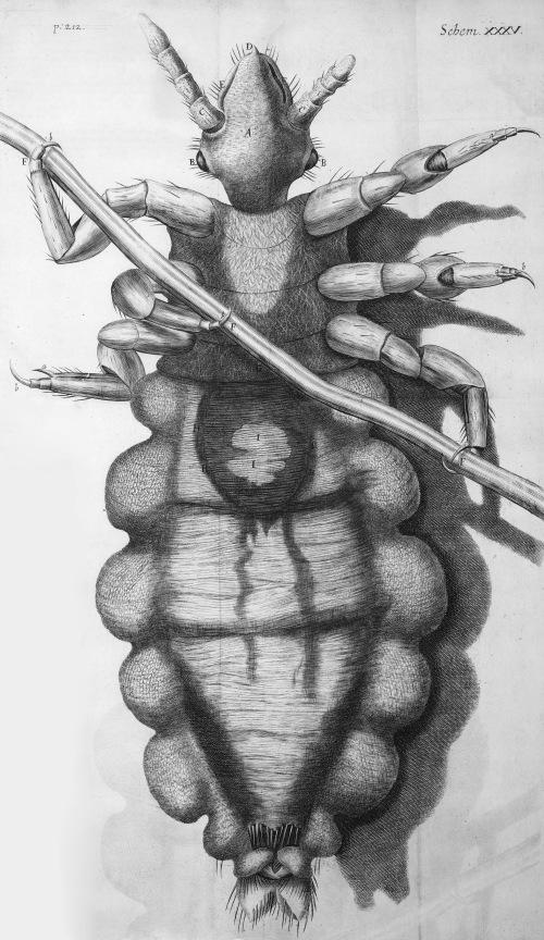 Hooke's Louse Micrographia