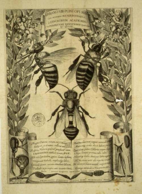 Stelutii Melissographia