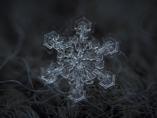 Snowflake photo Alexey Kljatov  The Atlantic Dec 4 2013