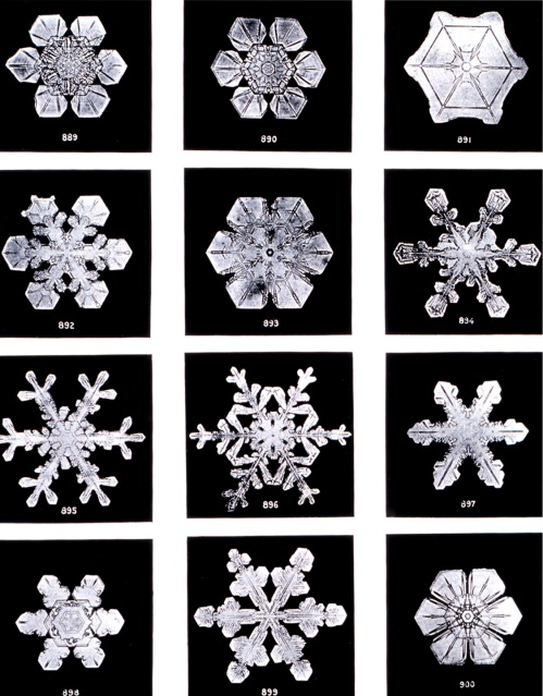 Snowflakes Wilson Bentley