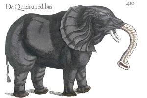 Gesner-elefant3-300x200