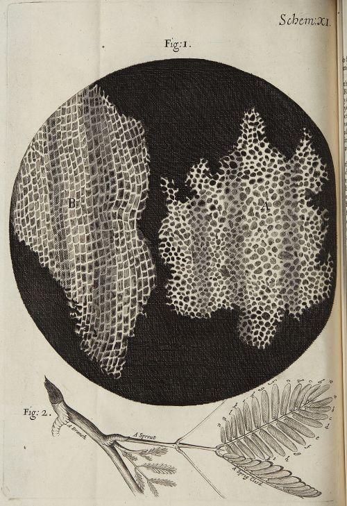 Micrographia_Schem_11
