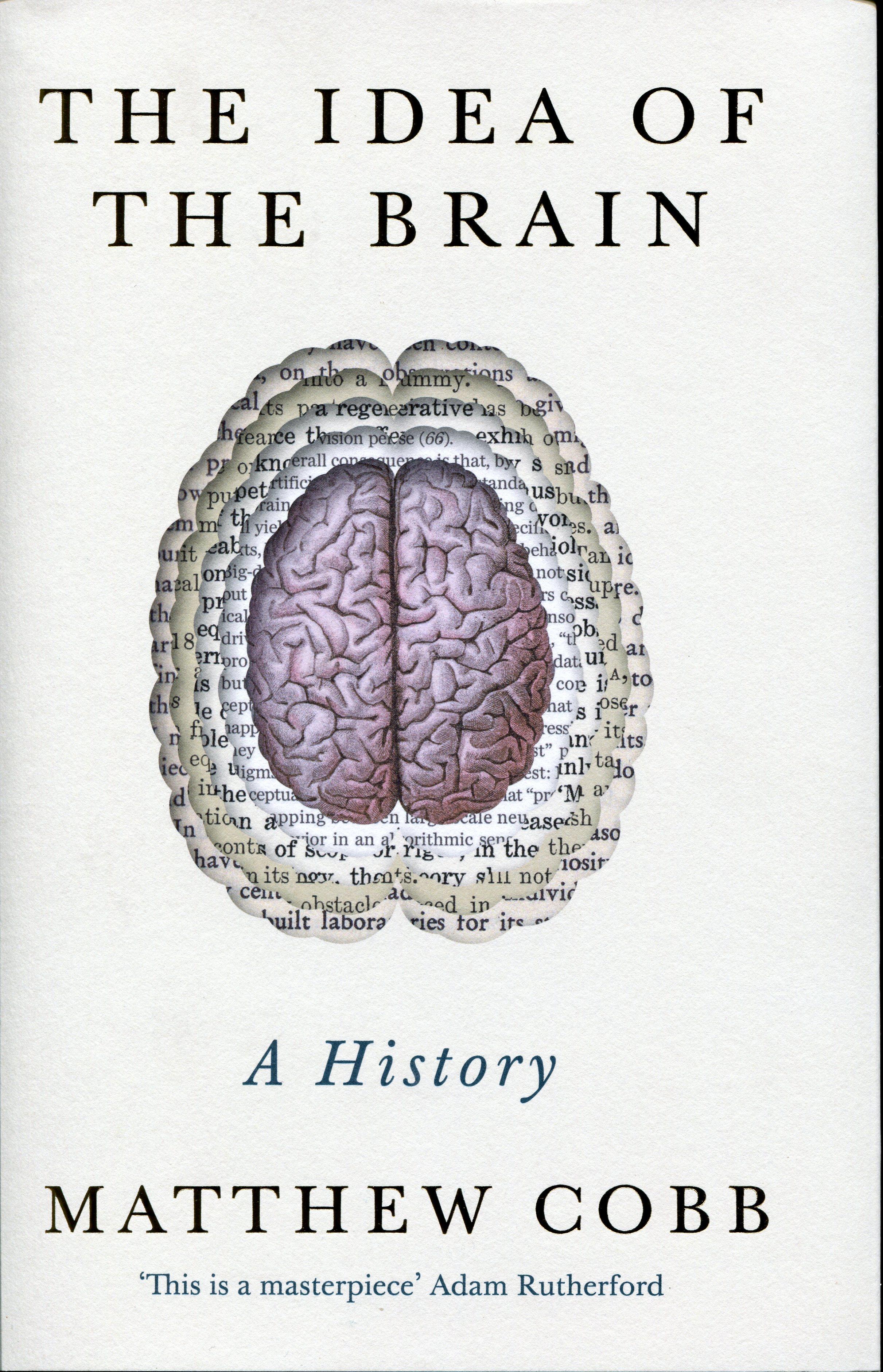 brain002
