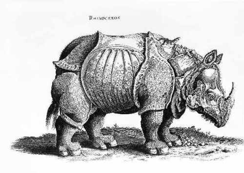 36_230156~albrecht-duerer_rhinoceros-no-76-from-'historia-animalium'-by-conrad-gesner-(1516-65)-published-in-july-1815