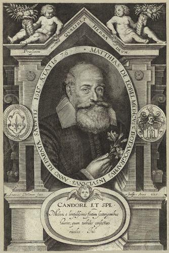 NPG D25673,Matthias de Lobel (Lobelius),by Francis Delaram