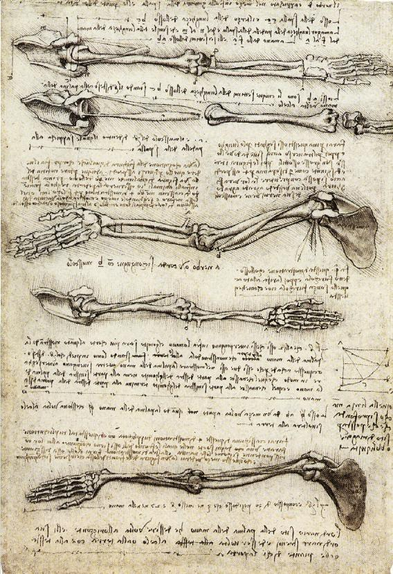 Studies_of_the_Arm_showing_the_Movements_made_by_the_Biceps