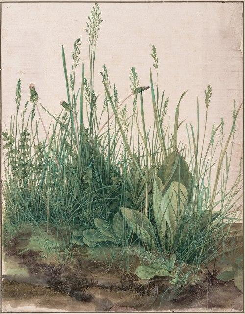 1920px-Albrecht_Dürer_-_The_Large_Piece_of_Turf,_1503_-_Google_Art_Project