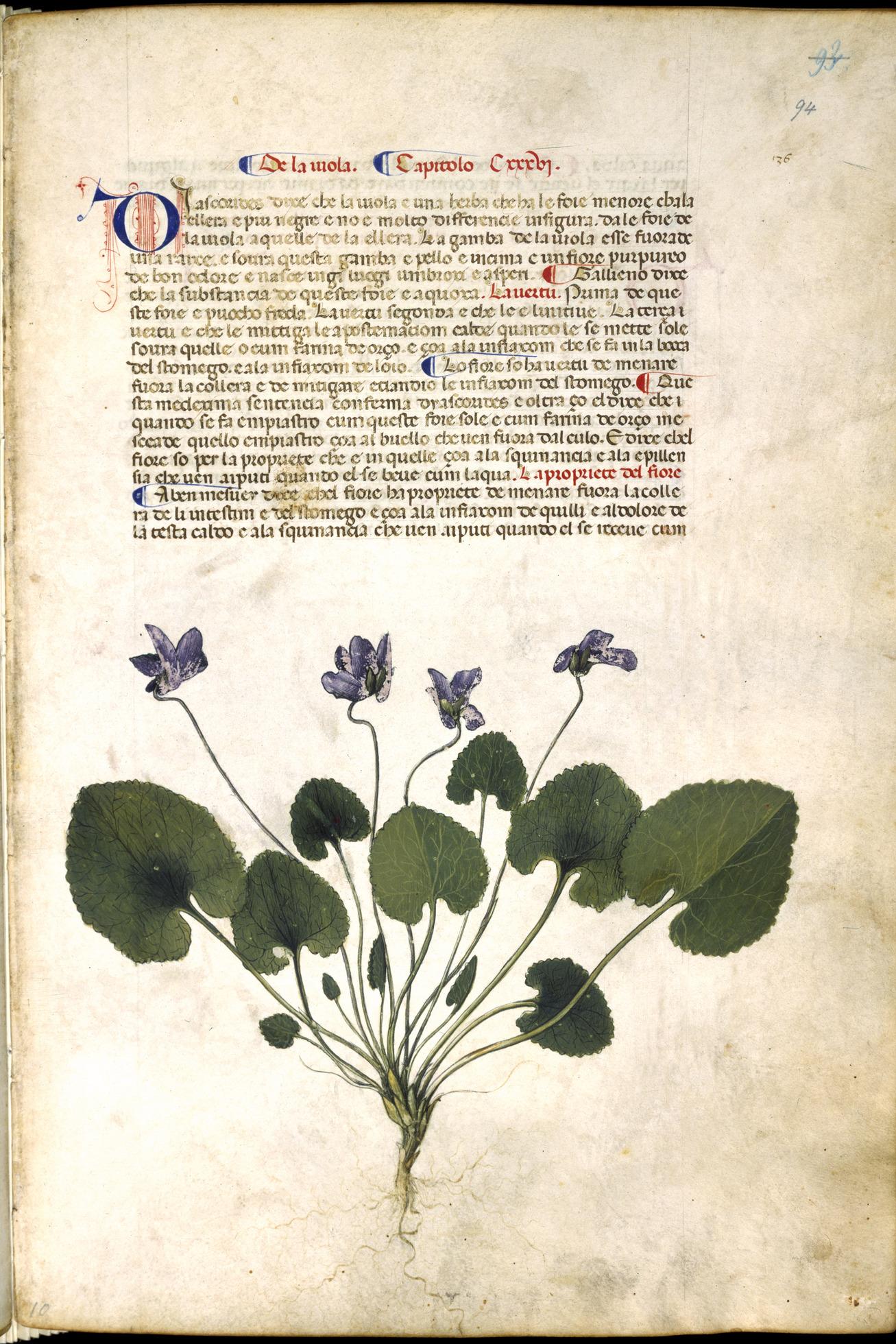 Violet_plant_-_Carrara_Herbal_(c.1400),_f.94_-_BL_Egerton_MS_2020